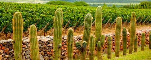 Relevamiento vitivinícola zona Norte Wines of Argentina
